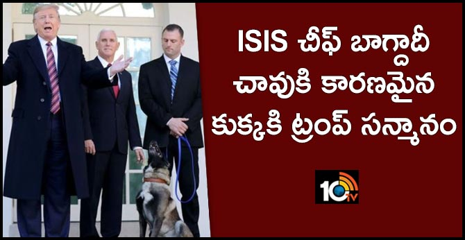 Trump honors ISIS-fighting dog Conan at White House