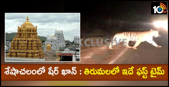 big tiger found in tirumala