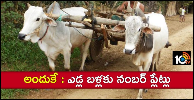 bullock carts with number plates run in bijapur 33 villages chhattisgarh