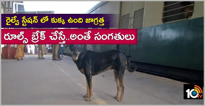 chennai abandoned dog assisting rpf to warn commuters against footboard traveling