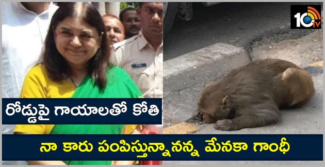 help from maneka gandhi for injured monkey