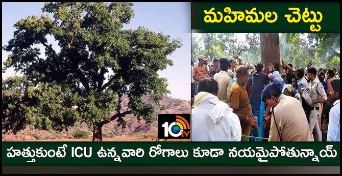 madhya pradesh rumour of healing tree patient welfare in Madhya Pradesh jungle