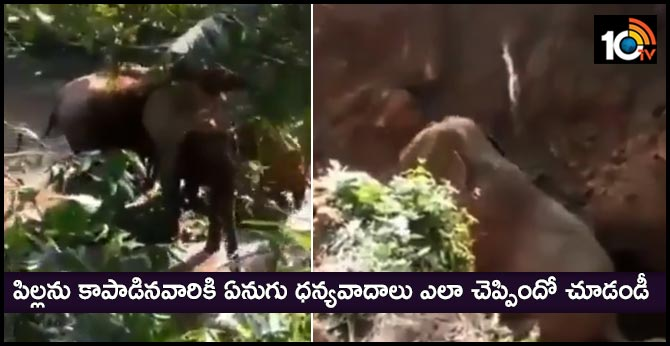 mother elephant thanks forest staff who helped rescued her calf