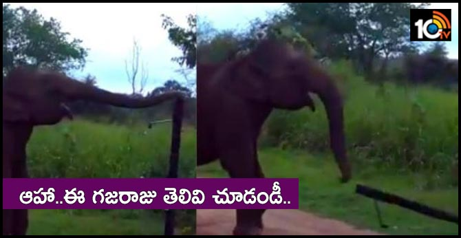 watch video how smart elephant breaks electric fenceing