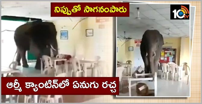 Elephant walks into an Army canteen in West Bengal, tosses furniture