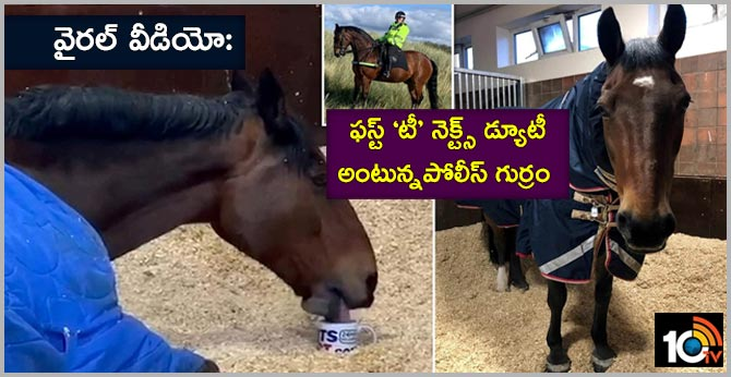 Police Horse Refuses To Work Without His Cup Of Morning Tea in  Merseyside England