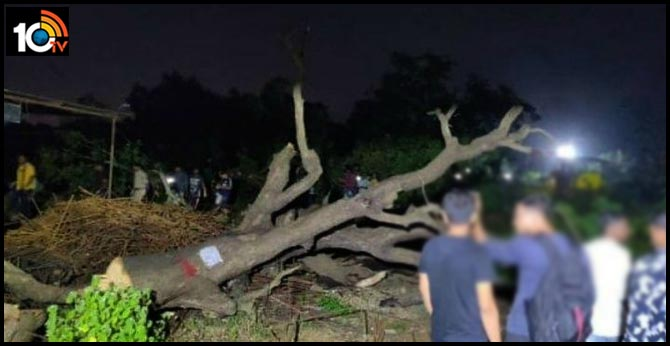 Rs. 9 Thousand fine for tree Cutting