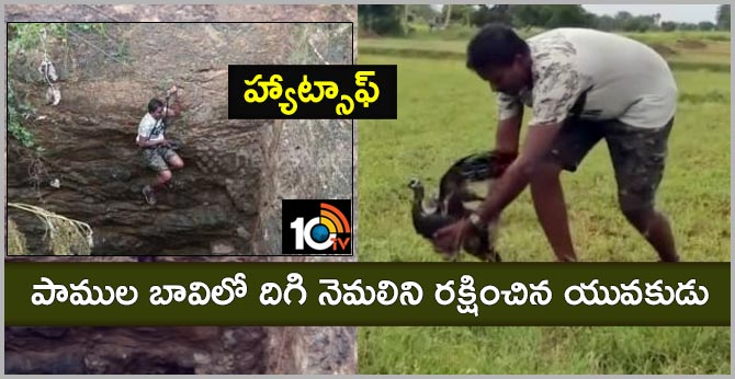 Tamilnadu man rescued life peacock from snake infested well