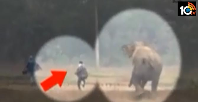 elephant Giving life to one person