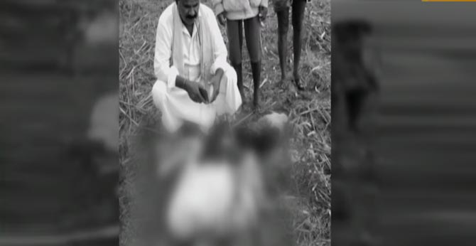 leopard killed cow's calf in rangareddy