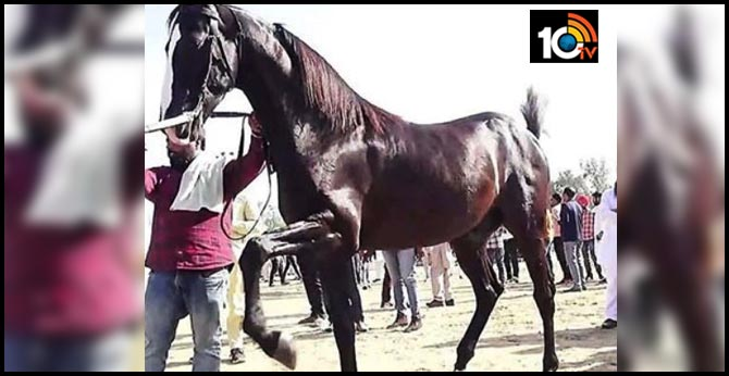 sarangkheda horse fair chetak on the trot..Shan's horse as Special Attraction
