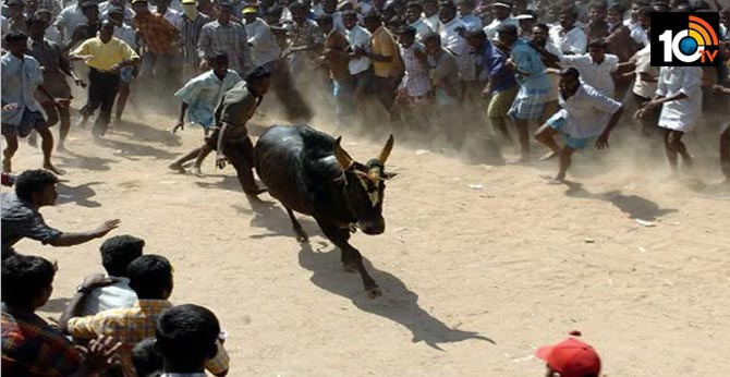A tragedy in Jallikattu, The bull killed the young man