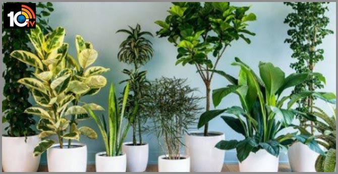 Desk Plants Can Reduce Stress