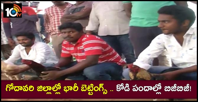 Bheemavaram Betting: Godavari Districts arrangements started for Cock fights of Sankranthi Festival