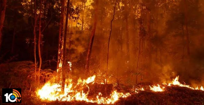 Help Victims Australia Fire