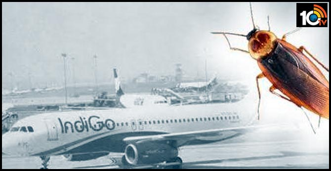 IndiGo asked to compensate cockroach on Pune-Delhi flight