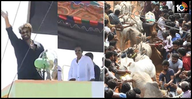 Jallikattu in Rangampeta: Mohan Babu and Manchu Manoj Special Attraction