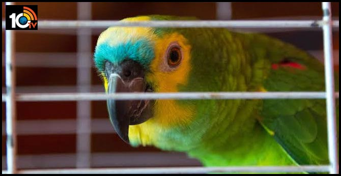 Parrot's chilling 'let me out' cries prompt 911 call, police visit to Florida man's house