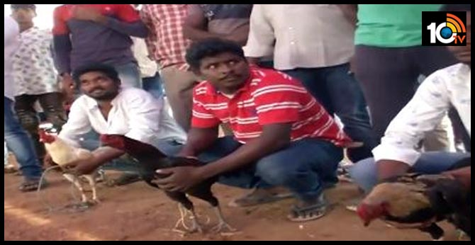 The first chicken race in the West Godavari district, start at Eluru