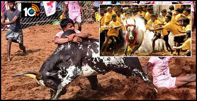 jallikattu competitions to be held from jan15 jan 31 in madurai district