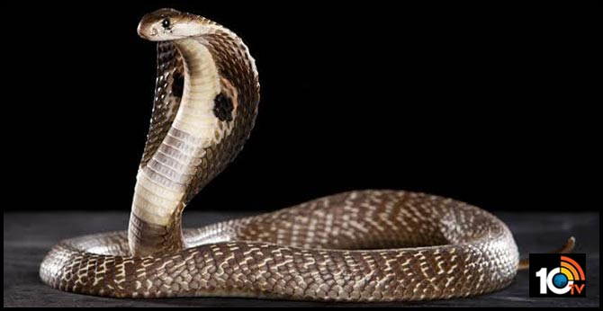 Woman Killed Mother In Law With Snake Bite..After She Causes Problem In Extramarital Affair