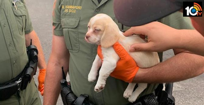 'Cutest accomplice'?: Puppy taken in custody with man for shoplifting