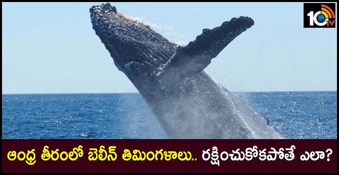 Huge baleen whales identified as the habitat of coastal areas in AP coastal area