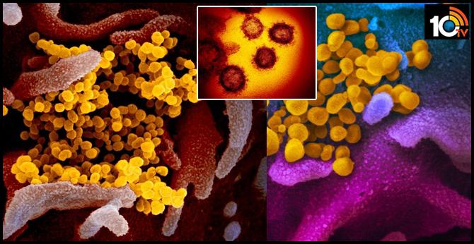 Images of new coronavirus just released