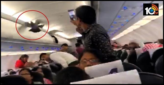 Pigeon Flies Inside Ahmedabad To Jaipur GoAir Flight.. Video Goes Viral