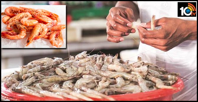 Kovid's effect.. reduced the prawns exports to abroad