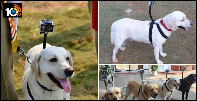 Sniffer dogs with cameras! Meet Indian Railways' unique 'security personnel' at the Visakhapatnam station