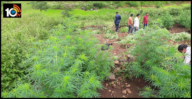 Visakha Agency's ganja cultivators getting external support?