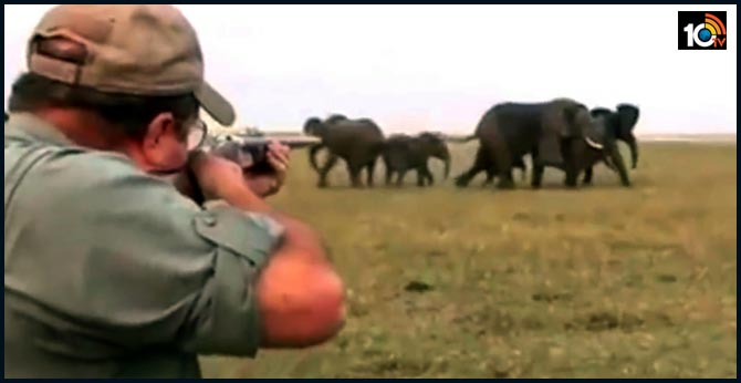 Botswana to auction elephant hunting licences after lifting ban