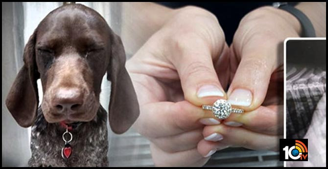 dog in south africa swallows owner expensive engagement ring
