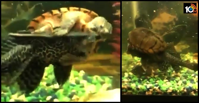 water fight: Tortoise qurreling with fish