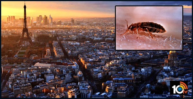 france launches anti bed bug offensive