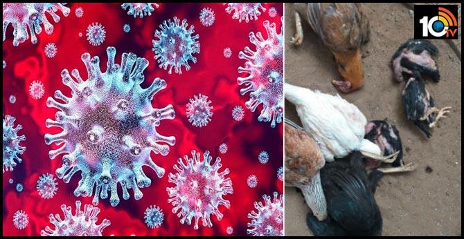 new virus in konaseema andhra pradesh