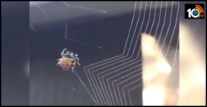spider web is buidling a home. Not a single degree of flaw.