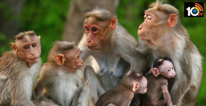 monkey fever claims second victim in Karnataka