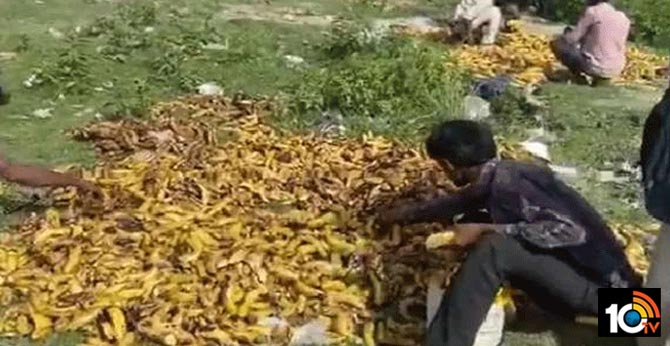 Migrate wagers eat decomposed fruits on the roads during lock down