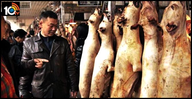 Prohibition on sale of dog meat in China