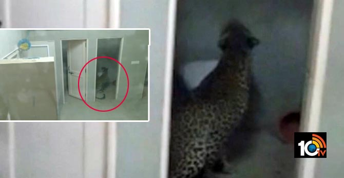 The leopard that entered the hospital