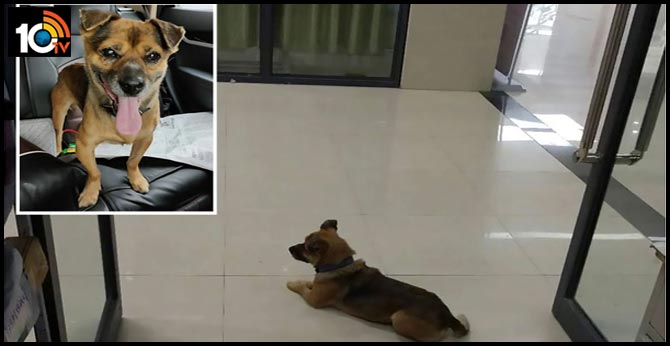 A Dog Waits 3Months at Hospital for His Owner.. But his Owner Dies of COVID-19