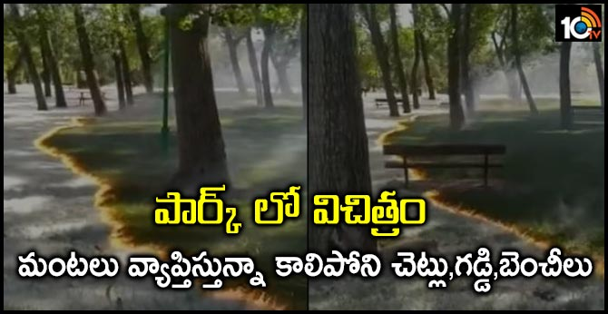 A Fire Burns Without Touching Trees Or Grass In This Baffling Video