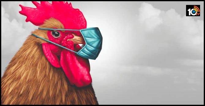 Police are looking for an 'aggressive chicken' terrorizing bank customers in Louisiana
