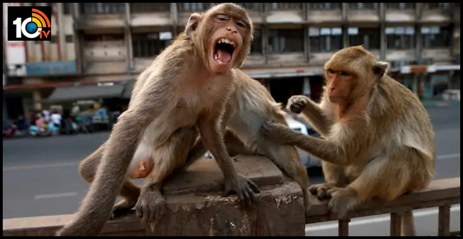 Monkeys escape with COVID-19 samples after attacking lab assistant