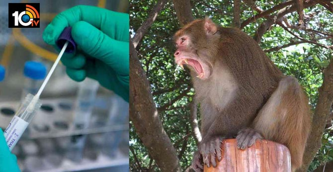 Monkeys run away with COVID 19 test samples in meerut