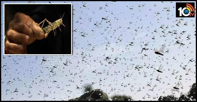 locusts are coming close to the telangana