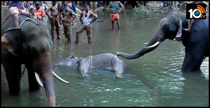 kerala elephant death case investigation under way, focus on three suspects