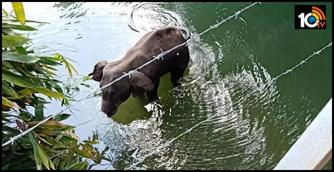Kerala elephant death: Police say cracker-stuffed coconut used